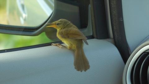 Bird-r4m_okj-05173