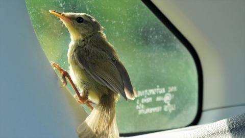 Bird-r4m_okj-05187