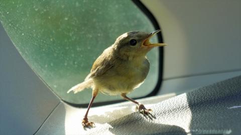Bird-r4m_okj-05209