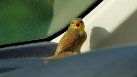 Bird-r4m_okj-05234