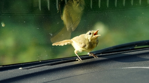 Bird-r4m_okj-05242