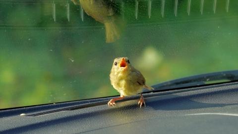 Bird-r4m_okj-05246